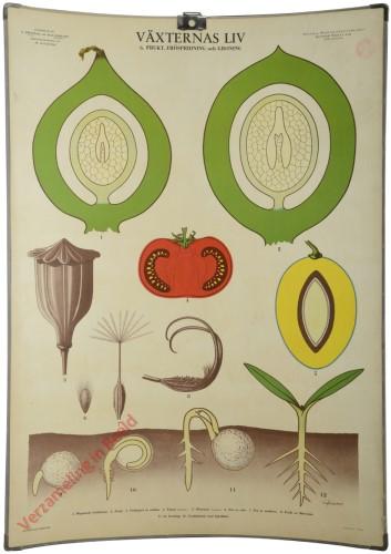 6 - Frukt, fröspridning och groning