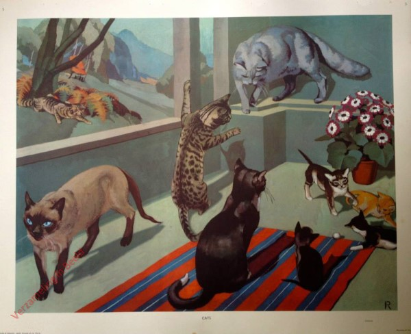3 - Cats