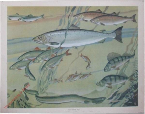 16 - Freshwater Fish