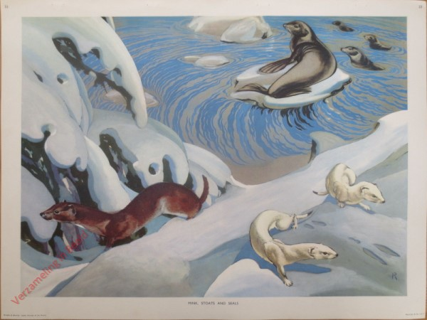 33 - Mink, Stoats and Seals