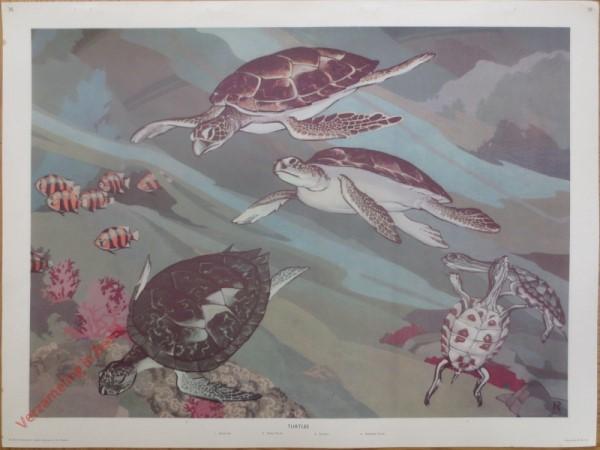 35 - Turtles