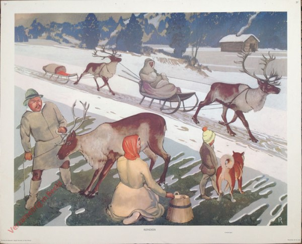 37 - Reindeer Pulling Sledges in The Snow