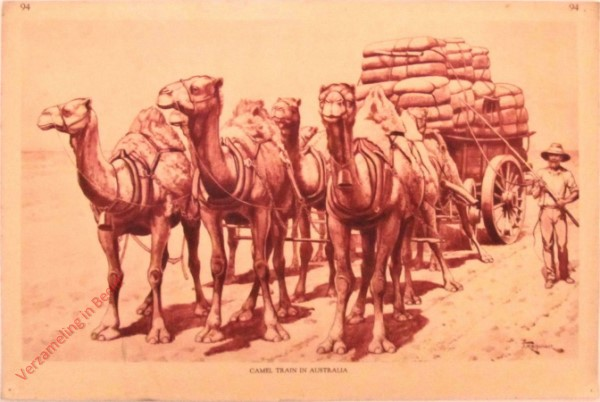 94 - Camel Train in Australia