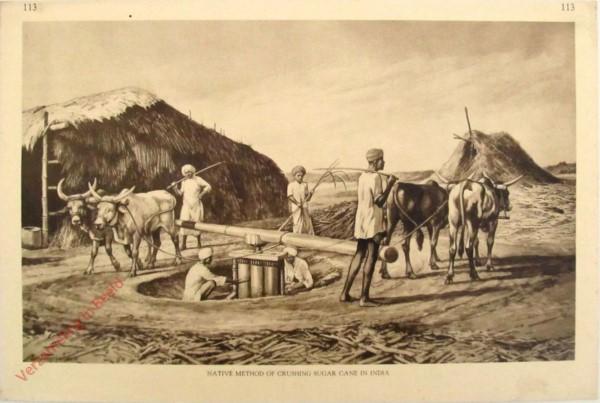 113 - Native Method of Crushing Sugar Cane in India