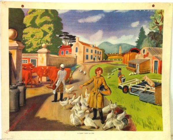 Set 1-13 - Dairy farm in Eire