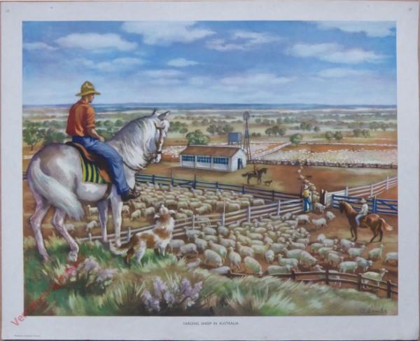 Set 1-17 - Yarding sheep in Australia