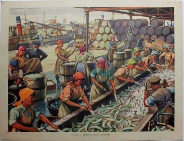 Set 1-24 - Herrings II – Preparing the fish for export