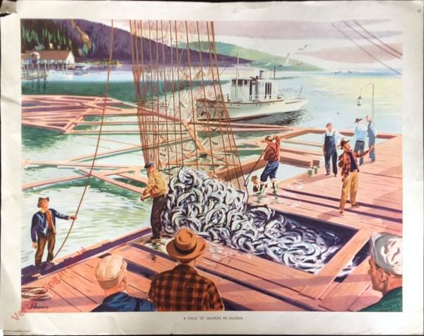 Set 1-28 - A Haul of Salmon in Alaska