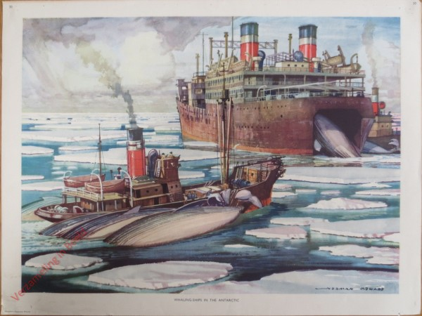 Set 1-30 - Whaling-ships in the Antarctica