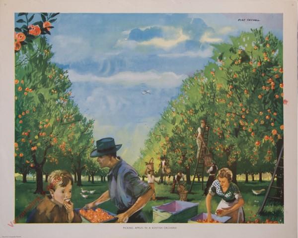 Set 1-31 - Picking apples