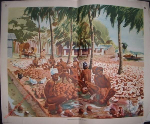 Set 1-39 - Preparing copra in Ceylon