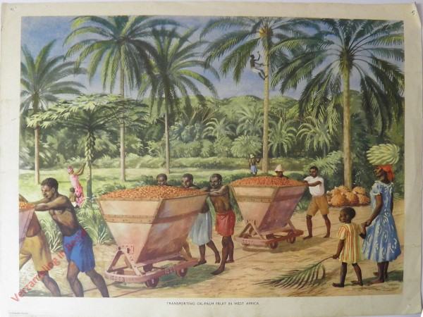Set 1-42 - Transporting oil palm fruit W. Africa