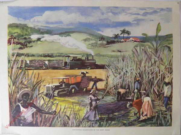 Set 1-48 - Harvesting sugar cane In West Indies