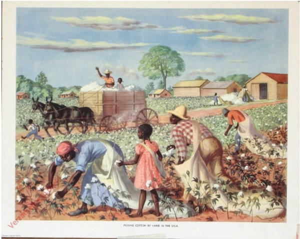 Set 2-68 - Picking cotton by hand in the U.S.A.
