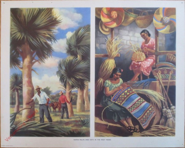 Set 2-79 - Raffia palms and hats in the West Indies