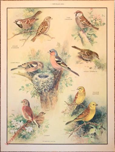 BRIDS - 1 - Hard-billed birds