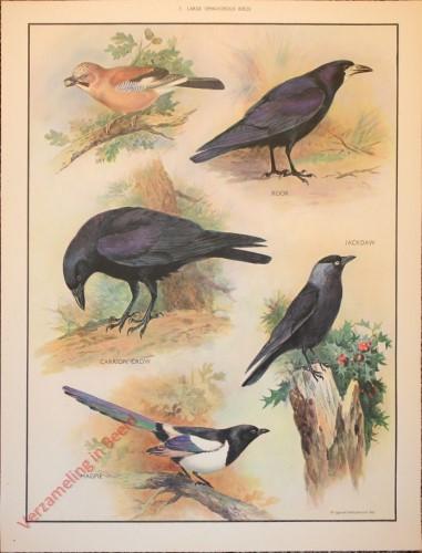 BRIDS - 7 - Large omnivorous birds