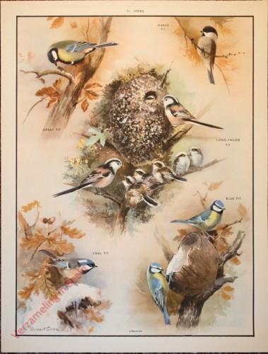 BRIDS - 11 - Birds in the winter - Titmice