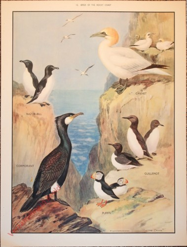 BRIDS - 12 - Birds of the rocky coast