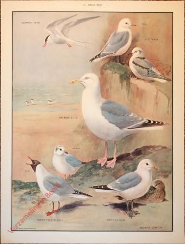 BRIDS - 13 - Seaside birds