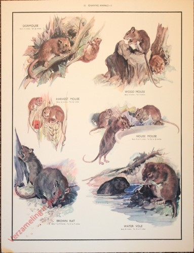 ANIMALS - 18 - Gnawing animals - II