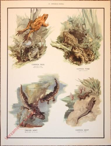 ANIMALS - 19 - Amphibious animals