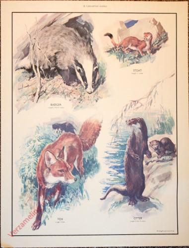 ANIMALS - 20 - Flesh-eating animals