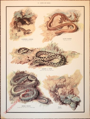 ANIMALS - 22 - Lizards and snakes