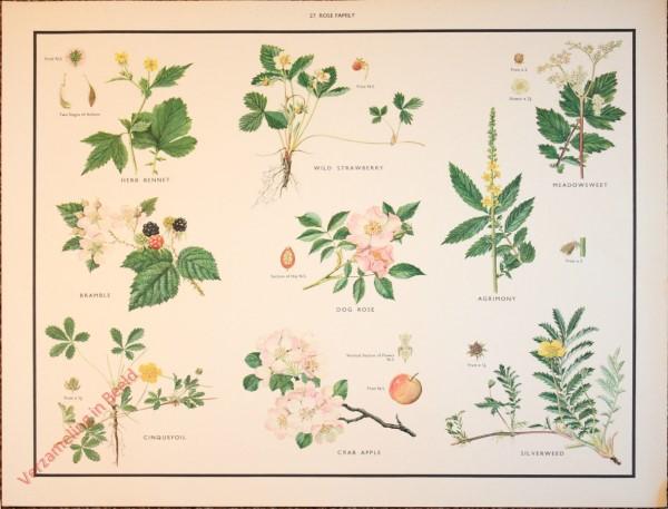 WILD FLOWERS - 27 - Rose family