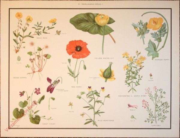 WILD FLOWERS - 34 - Miscellaneous families - I