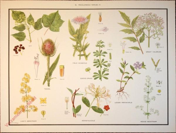 WILD FLOWERS - 36 - Miscellaneous families - III
