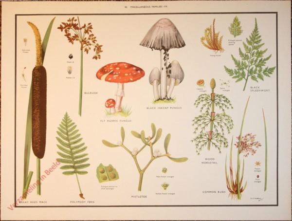 WILD FLOWERS - 40 - Miscellaneous families - VII
