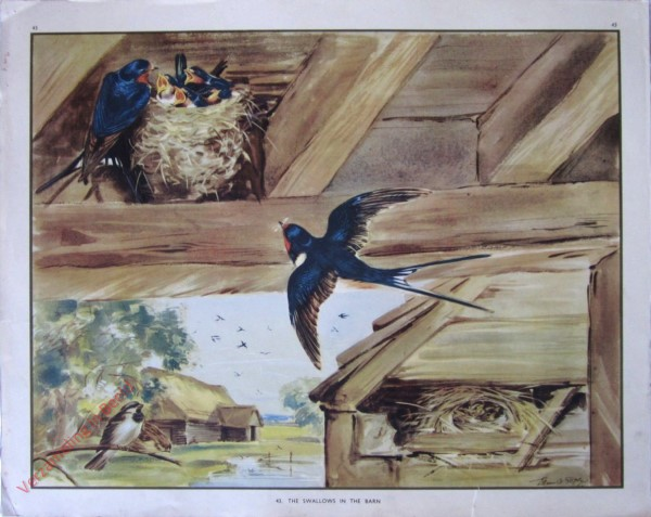 43 - The Swallows in the Barn