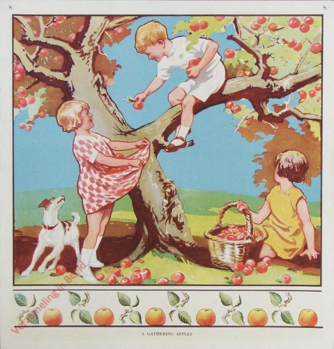 8 - Gathering apples