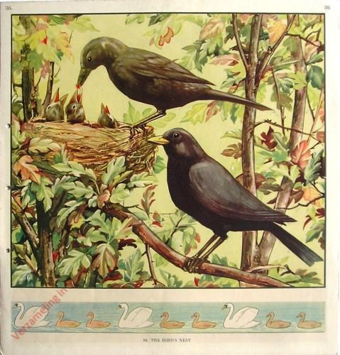 36 - The Bird's Nest