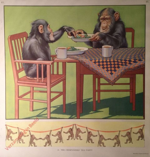 41 - The Chimpanzees' Tea Party