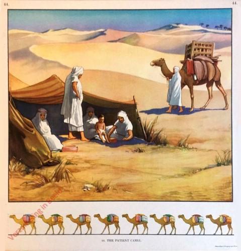 44 - The Patient Camel