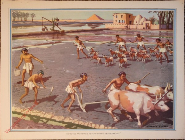 3 - Ploughing and sowing in Egypt during the pyramid age