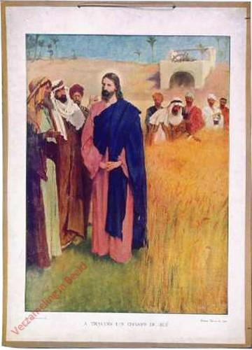 31 - Jezus iin de velden