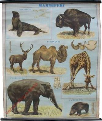 Mammiferi [Zeehond, Bison, Edelhert, Kameel, Giraffe, Indische olifant, Wild zwijn]