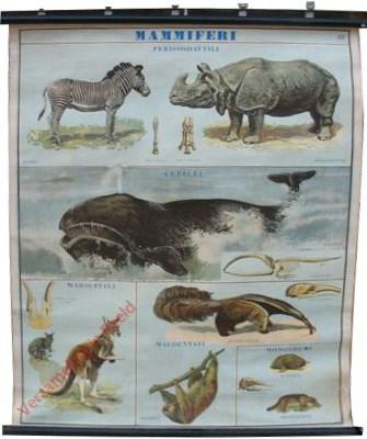 Mammiferi  [Zebra, Indische neushoorn, Walvis, Kangoeroe, Miereneter, Luiaard]