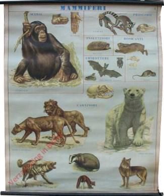 Mammiferi  [Chimpansee, Lemur, Egel, Haas, Vleermuism, Muis, Leeuwen, IJsbeer, Hyena, Das, Marter, Wolf]