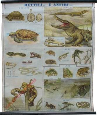 Rettilli e Anfibi [Schildpad, Krokodil, Slang, Kikker, Pad, Salamander, Hagedis]
