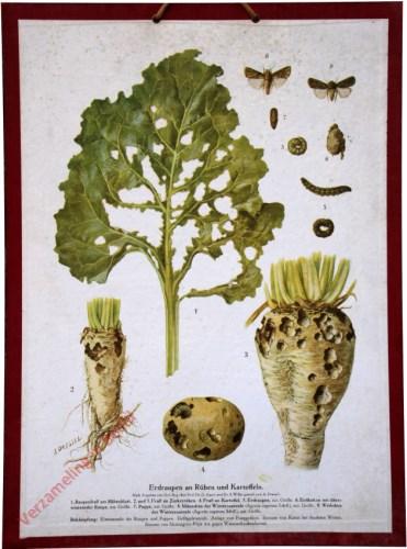 Erdraupen an R�ben und Kartoffeln