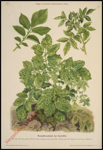 Mosaikkrankheit der Kartoffel