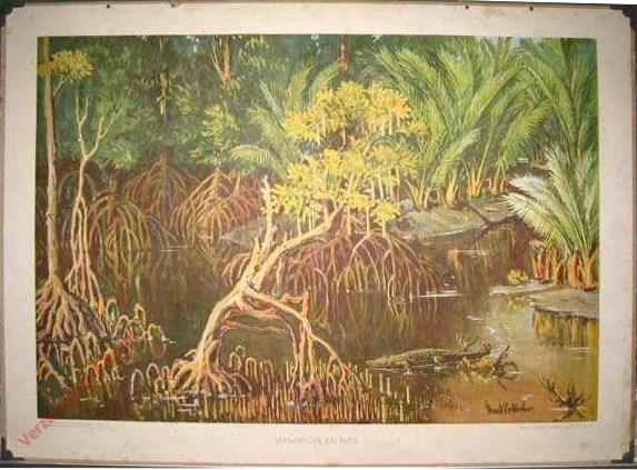 2 - Mangrove en nipa