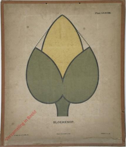 1e druk: No. LXXXVIII - Bloemknop