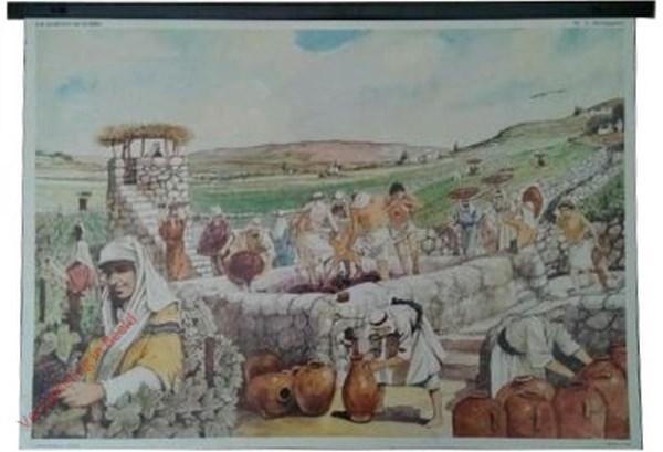 3 - De wijngaard