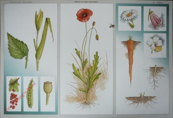 1 - Planten