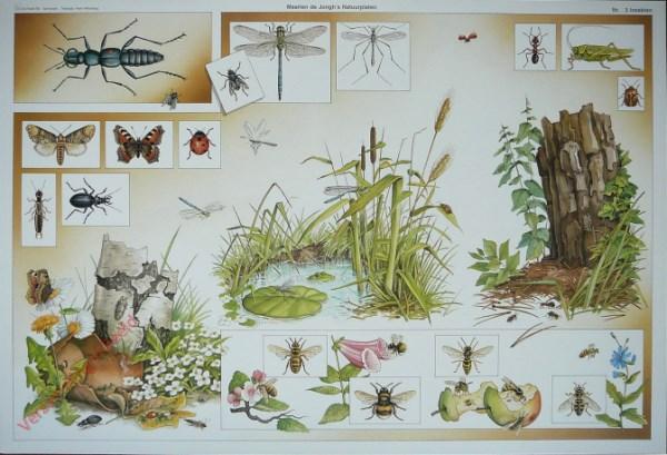 3 - Insekten